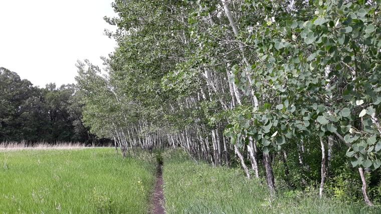 Moosehead Trail